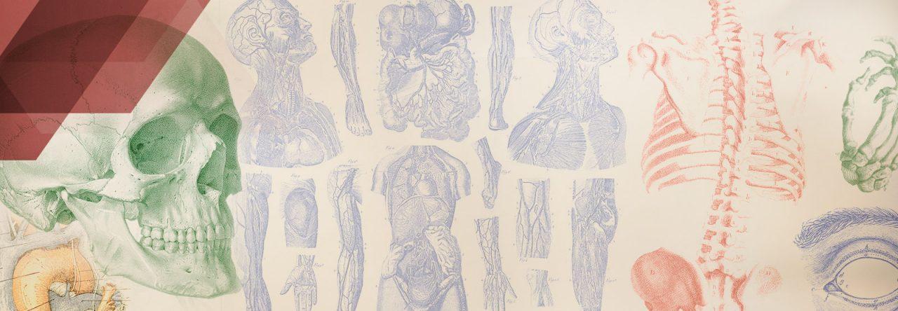 Anatomía de Gray – Biblioteca del Área de Ciencias de la Salud